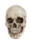 Isolated human skull on white. With clipping path Stock Images