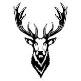 Isolated illustration of a deer head. Vector illustration of a deer head Stock Photo