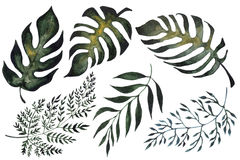 Isolated illustration of fern leaves. Hand painted watercolor green tropical leaves. Isolated illustration Stock Photo