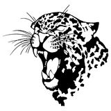 Isolated illustration of a leopard head. Vector illustration of a leopard head stock illustration