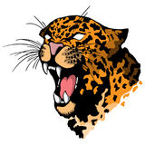Isolated illustration of a leopard head. Vector illustration of a leopard head royalty free illustration