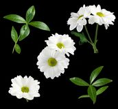Isolated image of flower Stock Images
