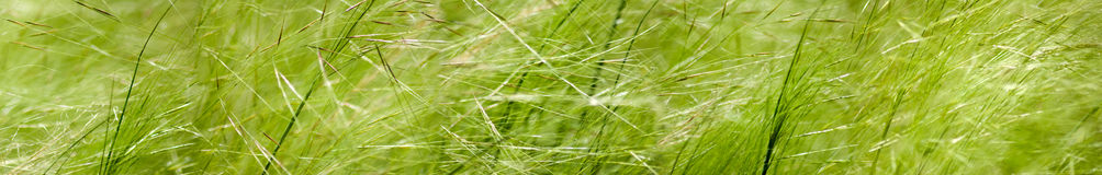 Isolated image of a grass on a white background Royalty Free Stock Images