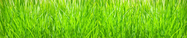 Isolated image of a grass on a white background Stock Image