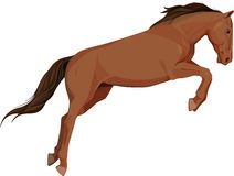 Isolated image of jumping horse Stock Photos