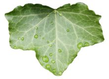 Isolated image of a leaf Royalty Free Stock Images