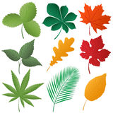 Isolated image of a leaves Stock Photo