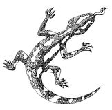 Isolated image of a salamander on a white background. royalty free illustration