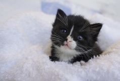 Small black kitten snuggling in the blankets Royalty Free Stock Photos