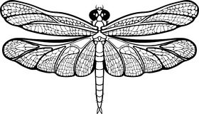 Isolated images of a dragonfly. Stock Images