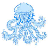 Isolated jellyfish. Isolated curly jellyfish. Sea jelly creature Royalty Free Stock Photo