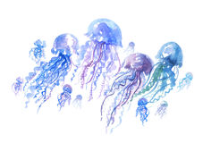 Isolated jellyfish groop watercolor illustration. vector illustration