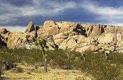 Isolated Joshua Trees National Park California Sonora Desert. Scenic Sonora Desert Landscape and Rugged Rocks in Joshua Tree National Park California USA royalty free stock photo