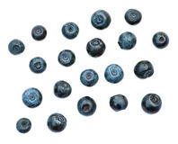 Isolated juicy blueberries royalty free stock photos