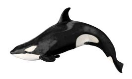 Isolated killer whale Stock Photography