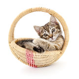 Isolated Kitten in Basket Royalty Free Stock Images