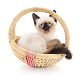 Isolated Kitten in Basket Royalty Free Stock Photography