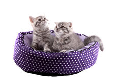 Isolated kittens. Stock Photography