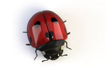 Isolated ladybird Stock Photography