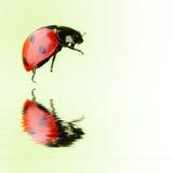Isolated ladybird over water stock image