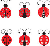 Isolated Ladybug Illustrations. Isolated red and black ladybugs with white flowers and black flowers, insects, nature, flora, fauna Royalty Free Stock Photography
