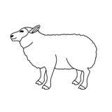 Isolated lamb animal design Royalty Free Stock Photos