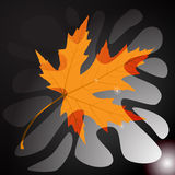 isolated leaf maple απεικόνιση Στοκ φωτογραφία με δικαίωμα ελεύθερης χρήσης