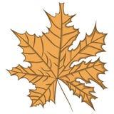 isolated leaf maple επίσης corel σύρετε το διάνυσμα απεικόνισης Σχεδιασμός με το χέρι Στοκ Φωτογραφίες
