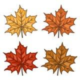 isolated leaf maple Φύλλα φθινοπώρου Καθορισμένο φύλλο σφενδάμου διανυσματικό λευκό καρ&chi Στοκ εικόνα με δικαίωμα ελεύθερης χρήσης