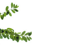 Isolated leafs. Plant leafs isolated on white background Royalty Free Stock Photography