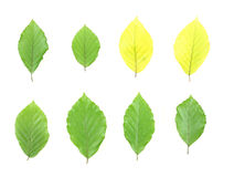 Isolated leaves stock image
