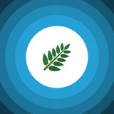 Isolated Leaves Flat Icon. Acacia Leaf Vector Element Can Be Used For Acacia, Leaf, Leaves Design Concept. Royalty Free Stock Image