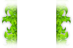 Isolated Leaves Frame Royalty Free Stock Images