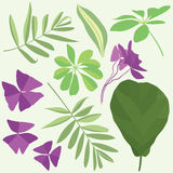 Isolated leaves of potted flowering plants. Flat illustration, set of leaves Royalty Free Stock Photography