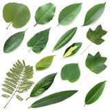 Isolated leaves set Royalty Free Stock Photo