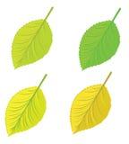 Isolated leaves set Stock Image