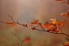 Isolated leaves with spider web in a autumn morning Stock Images