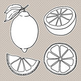 Isolated lemons. Graphic stylized drawing. Vector illustration. Stock Photography