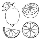 Isolated lemons. Graphic stylized drawing. Vector illustration. Stock Photo