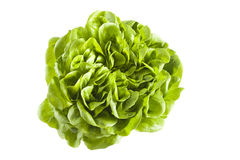 Isolated lettuce Stock Images
