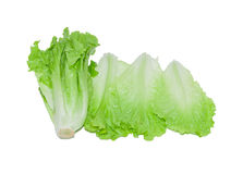 Isolated lettuce Royalty Free Stock Photography