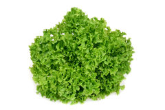 Isolated lettuce Royalty Free Stock Image