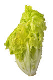 Isolated lettuce. Salad lettuce vegetables isolated on white ba. Green salad isolated on white background as package design element stock photography