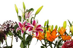 Isolated lily flowers Stock Images