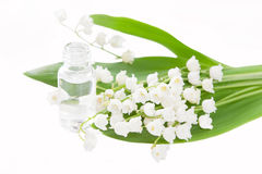 Isolated lily of the valley essence - concept for aromatherapy Royalty Free Stock Image