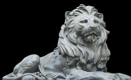 Isolated lion on black background Stock Photos