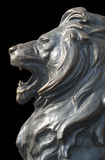 Isolated lion's head on black background Stock Image