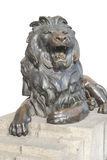 Isolated lion sitting on stone stage Royalty Free Stock Photo