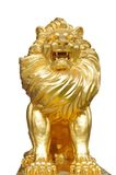 Isolated lion statues. Golden lion statues isolated on the white background royalty free stock photos