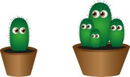 Isolated live cactus Stock Photos